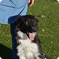Adopt A Pet :: Ricky - Meridian, ID