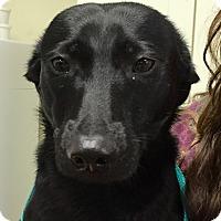 Adopt A Pet :: Chorder#2M - Orlando, FL