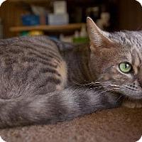 Adopt A Pet :: Sissy* - Parlier, CA