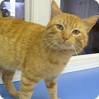 Adopt A Pet :: Alibi - Hamburg, NY