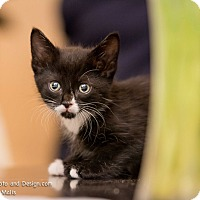 Adopt A Pet :: Gordie - Fountain Hills, AZ