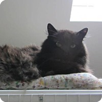 Adopt A Pet :: Sweetie - Kingston, WA
