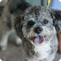 Adopt A Pet :: Teddy - Canoga Park, CA