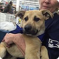 Adopt A Pet :: Hickory - Harmony, Glocester, RI