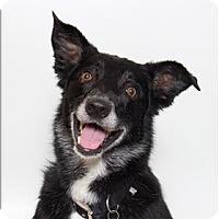 Adopt A Pet :: Nugget - San Luis Obispo, CA