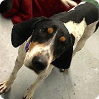 Adopt A Pet :: Eve: Fairfax - Cincinnati, OH