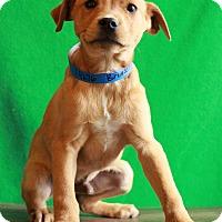 Adopt A Pet :: Bruiser - Waldorf, MD