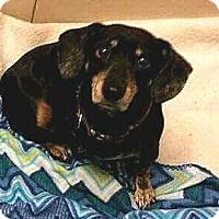 Adopt A Pet :: Rita - Andalusia, PA