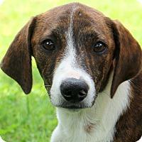 Adopt A Pet :: Blake - Glastonbury, CT