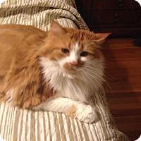 Adopt A Pet :: Gigi - Berkeley Hts, NJ