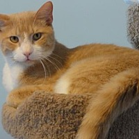 Adopt A Pet :: Todd - Penndel, PA