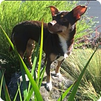 Adopt A Pet :: Pecan - San Francisco, CA