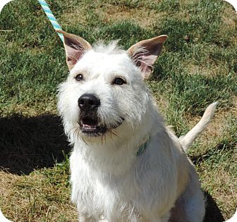Terrier (Unknown Type, Medium) Mix Dog for adoption in Sioux City, Iowa - LOUIE
