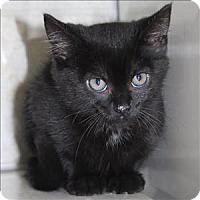 Adopt A Pet :: Sara (Sassypants) - Duluth, MN