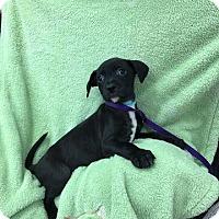 Adopt A Pet :: Buster - Plainfield, IL