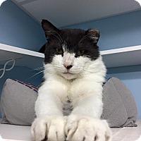 Adopt A Pet :: Alexander - Manchester, NH