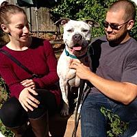 Adopt A Pet :: Kaz - Bellingham, WA