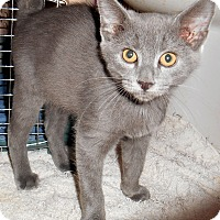 Adopt A Pet :: Ashby - Chattanooga, TN