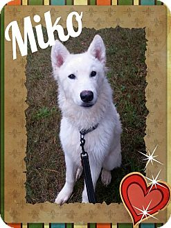 Husky/Shepherd (Unknown Type) Mix Dog for adoption in Stuart, Virginia - Miko