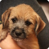 Adopt A Pet :: Maxine ADOPTED! - Jewett City, CT