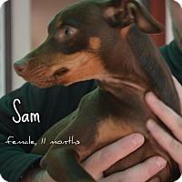 Adopt A Pet :: Samantha - Yreka, CA
