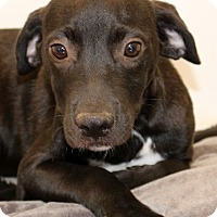 Adopt A Pet :: Onyx~ meet me! - Glastonbury, CT