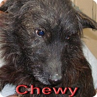 Adopt A Pet :: Chewy - Coleman, TX