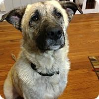 Adopt A Pet :: Mia - Mocksville, NC