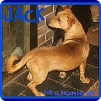 Adopt A Pet :: JACK - White River Junction, VT