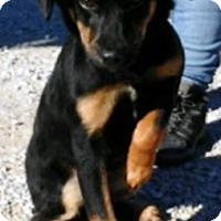 Adopt A Pet :: Aggie - Oswego, IL