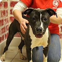 Adopt A Pet :: Rachel - Elyria, OH