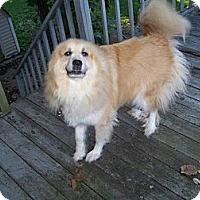 Adopt A Pet :: Harley - Wayne, NJ