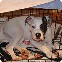 Adopt A Pet :: Salvador - Rochester, NY