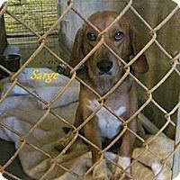 Adopt A Pet :: Sarge - Linden, TN