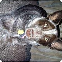 Adopt A Pet :: Gaia - adoption pending - Phoenix, AZ