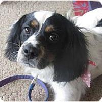 Adopt A Pet :: Caleb - Covington, KY