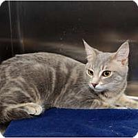 Adopt A Pet :: Cloey - Farmingdale, NY
