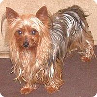 Adopt A Pet :: *Bitsy - PENDING - Westport, CT