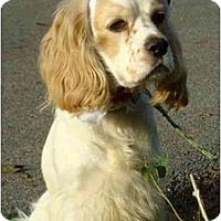 Adopt A Pet :: Ramsey - Sugarland, TX