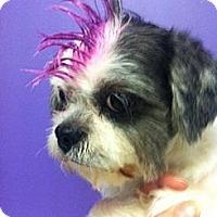 Adopt A Pet :: Tia - pasadena, CA