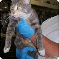 Adopt A Pet :: Sassy - Chesapeake, VA