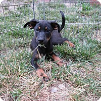 Adopt A Pet :: Romeo - Middletown, RI