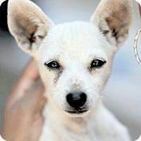Adopt A Pet :: Casper - Sunnyvale, CA