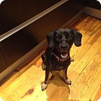 Adopt A Pet :: Cassie - Jupiter, FL