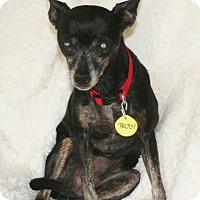 Adopt A Pet :: Trudy - Umatilla, FL