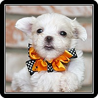 Adopt A Pet :: Barkley - San Dimas, CA