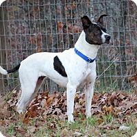 Adopt A Pet :: Stella - Towson, MD