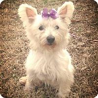 Adopt A Pet :: WestLynn