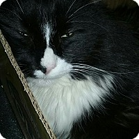 Adopt A Pet :: Skywalker - Trevose, PA