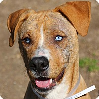 Adopt A Pet :: Caldwell - Fort Collins, CO
